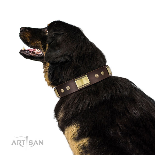 Walking dog collar of genuine leather with top notch decorations