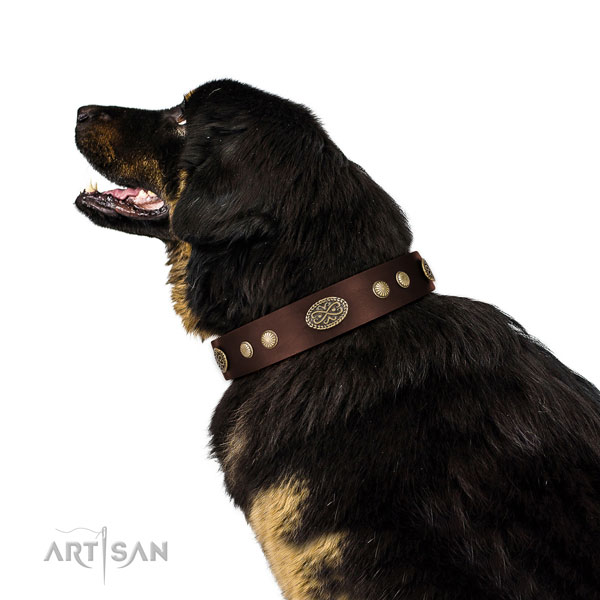 Durable D-ring on leather dog collar for stylish walking