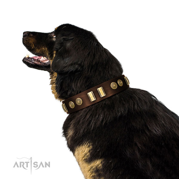 Corrosion resistant buckle on full grain leather dog collar for comfortable wearing