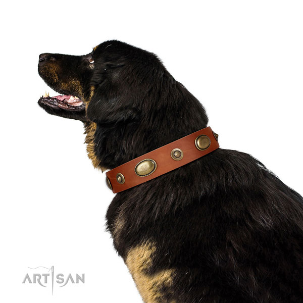 Everyday walking dog collar of leather with unusual embellishments