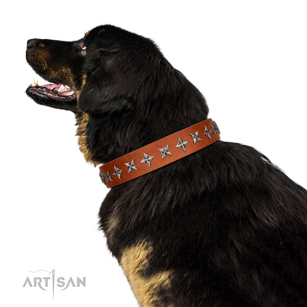 Top notch genuine leather dog collar with extraordinary embellishments