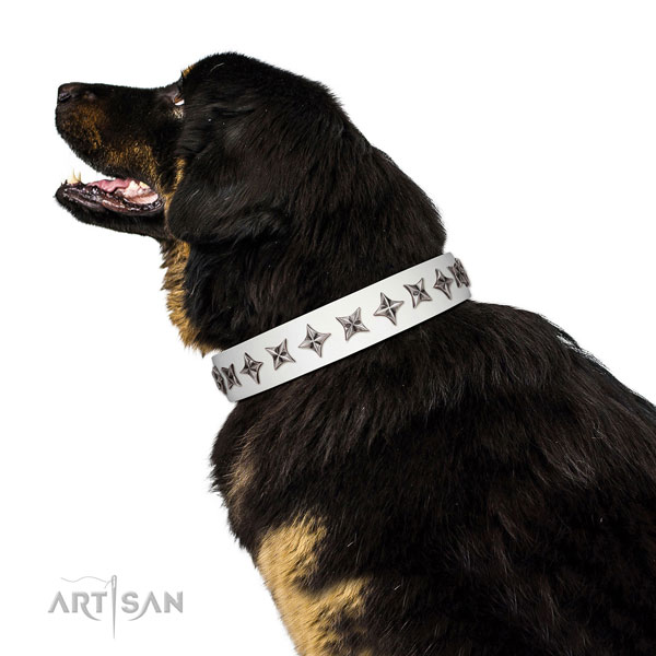 Top notch genuine leather dog collar with trendy adornments