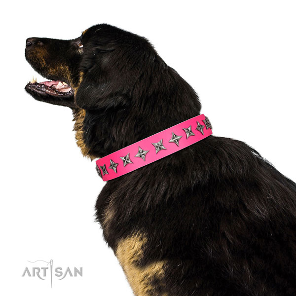 Reliable full grain leather dog collar with stunning embellishments