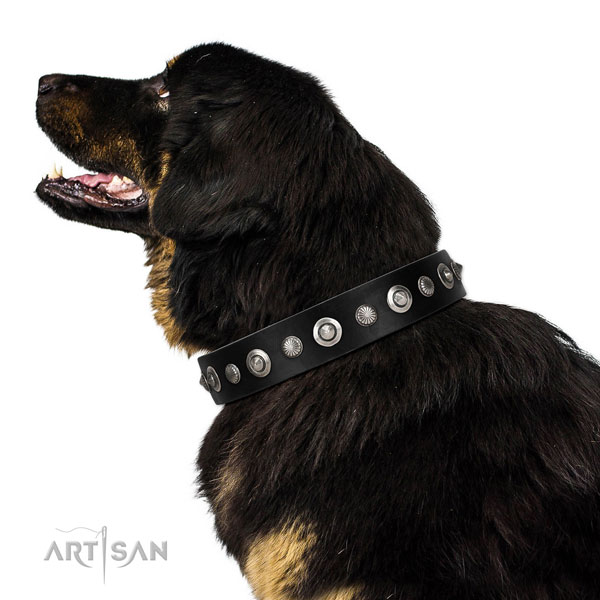 Strong full grain genuine leather dog collar with designer studs
