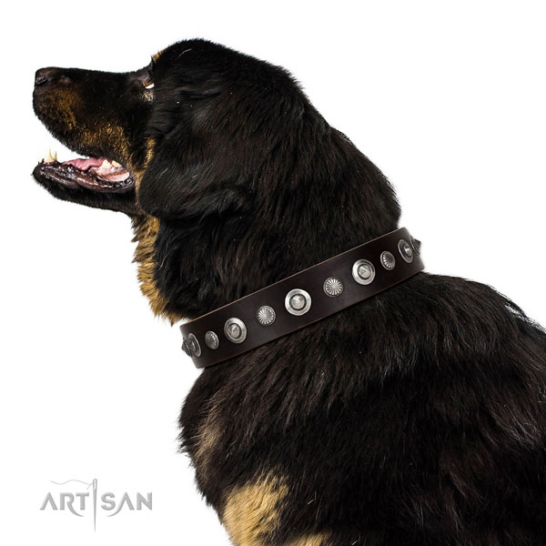 Top quality leather dog collar with exceptional studs