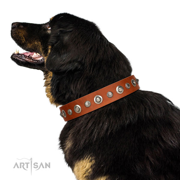 Leather collar with corrosion proof hardware for your impressive four-legged friend