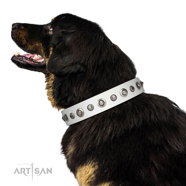 Leather collar with strong traditional buckle for your handsome pet