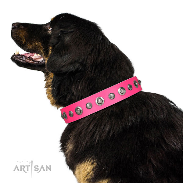 Leather collar with corrosion proof fittings for your handsome four-legged friend