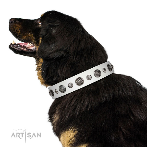 Studded full grain genuine leather dog collar with rust-proof D-ring