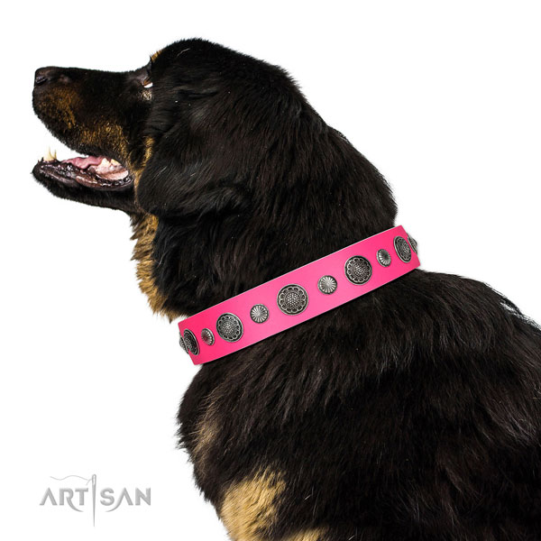 Designer Full grain natural leather dog collar with corrosion resistant buckle