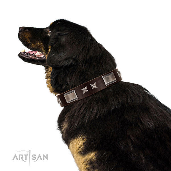Designer collar of genuine leather for your impressive canine