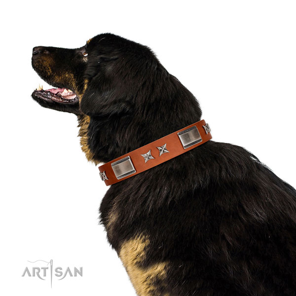 Everyday walking best quality full grain natural leather dog collar with adornments