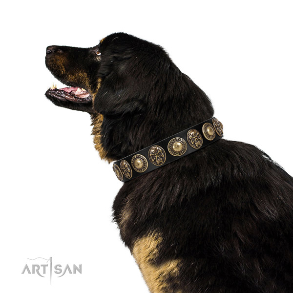 Amazing full grain genuine leather collar for your beautiful canine