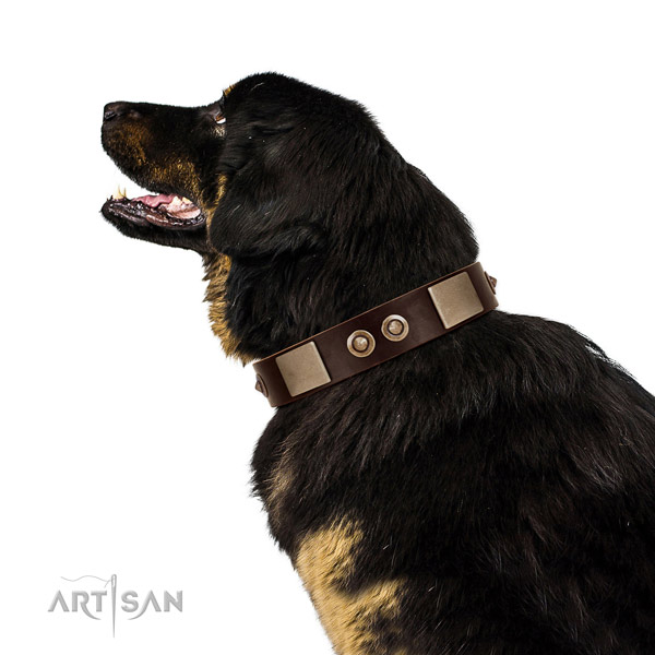 Durable D-ring on genuine leather dog collar for daily use