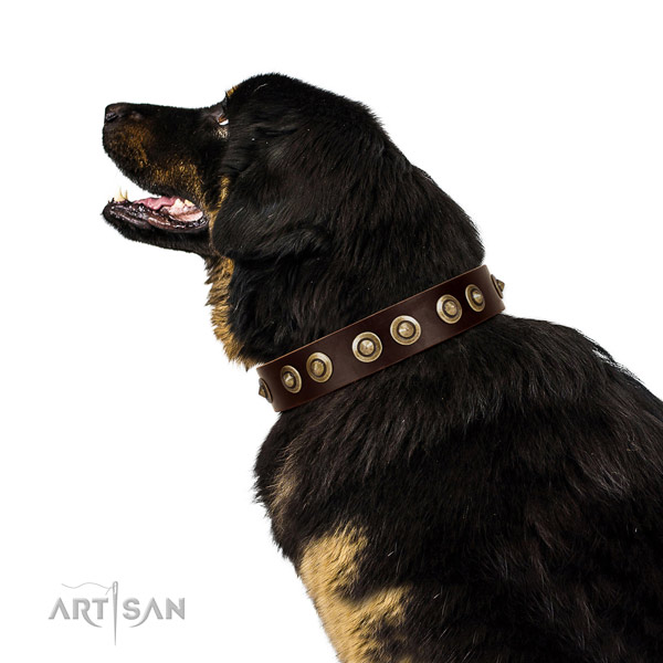 Corrosion proof traditional buckle on genuine leather dog collar for comfortable wearing