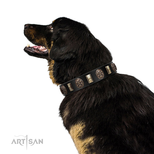 Full grain natural leather collar with decorations for your stylish dog
