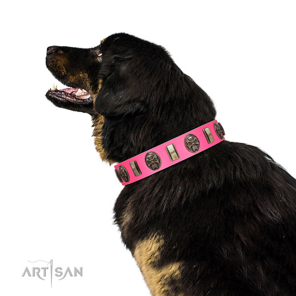 Strong buckle on genuine leather dog collar for comfy wearing