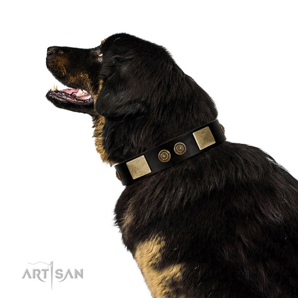 Comfortable wearing dog collar of leather with inimitable adornments