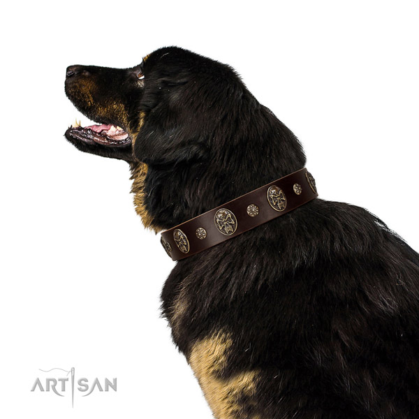 Handy use dog collar of natural leather with remarkable studs