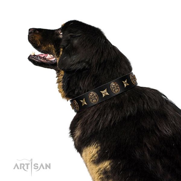 Handy use dog collar of natural leather with extraordinary embellishments