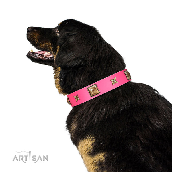 Full grain natural leather dog collar of soft to touch material with significant adornments