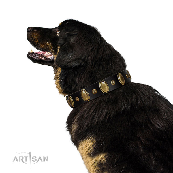 Natural leather dog collar of high quality material with stylish adornments