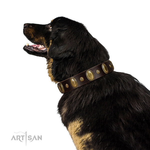 Inimitable full grain genuine leather dog collar with corrosion proof traditional buckle