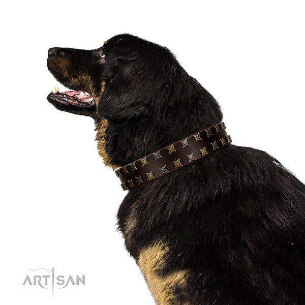 Best quality full grain natural leather dog collar with decorations for your four-legged friend