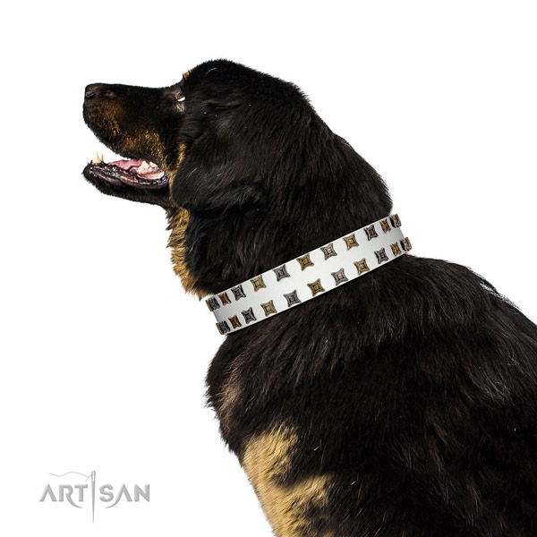 High quality full grain genuine leather dog collar with embellishments for your four-legged friend