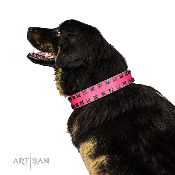 Durable leather dog collar with embellishments for your canine