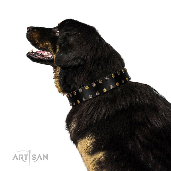 Designer full grain genuine leather dog collar with strong adornments