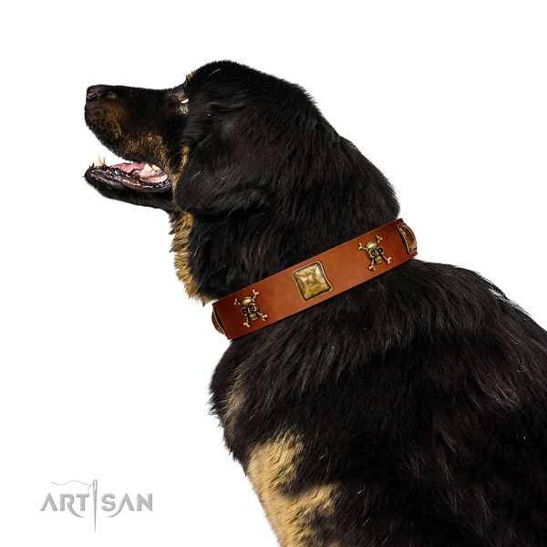 Stylish design natural leather dog collar with corrosion resistant adornments