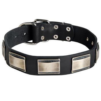 Leather Mastiff Collar with Solid Nickel Plates