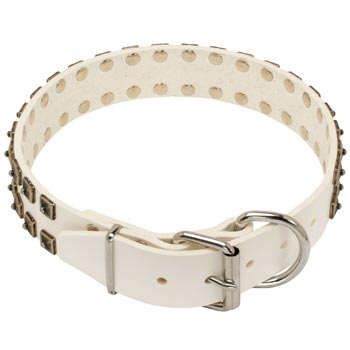 White Leather Dog Buckle Collar for Mastiff