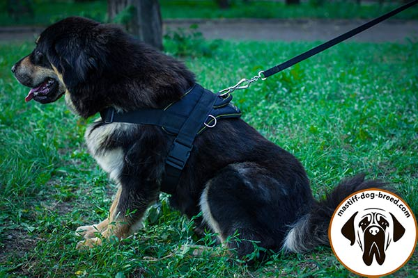 Water-proof all-weather nylon Mastiff harness