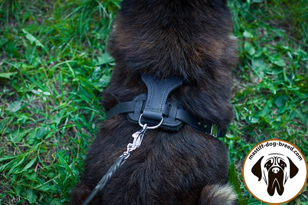Leather Mastiff harness with strong nickel plated hardware