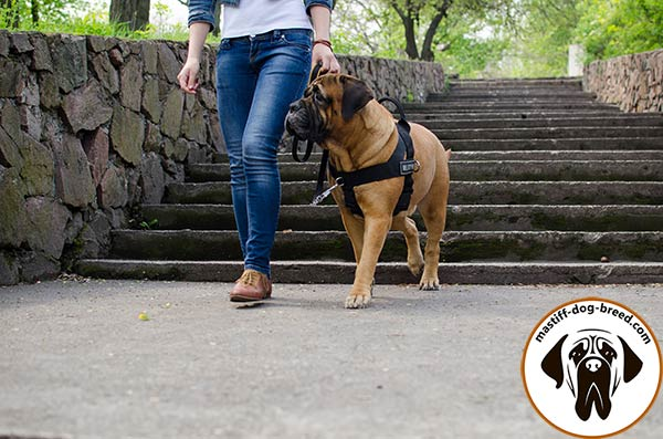 Easy-to-use nylon Bullmastiff harness with 2 D-rings for leash fixing