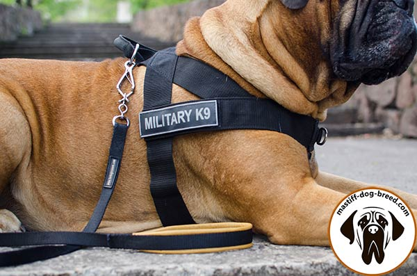 Nylon Bullmastiff harness with removable ID patches