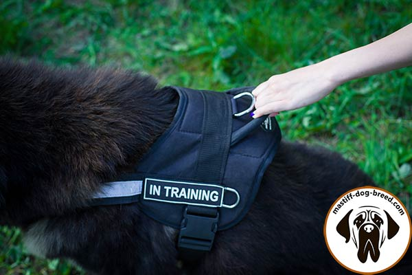 Comfortable nylon Mastiff harness with quick grab handle