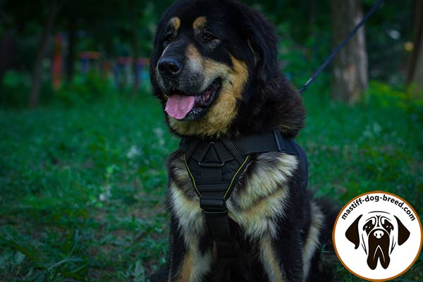 Training nylon Mastiff harness with soft padded chest plate