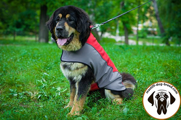 Nylon coat for Mastiff for comfy walking in the rain