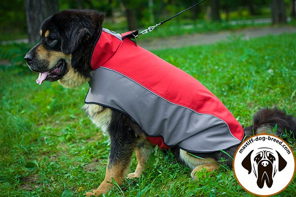 Water-resistant nylon dog coat for Mastiff