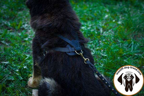 Pulling leather dog harness for Mastiff with brass D-ring for leash attachment