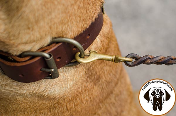 Mastiff leather leash with strong hardware for daily walks