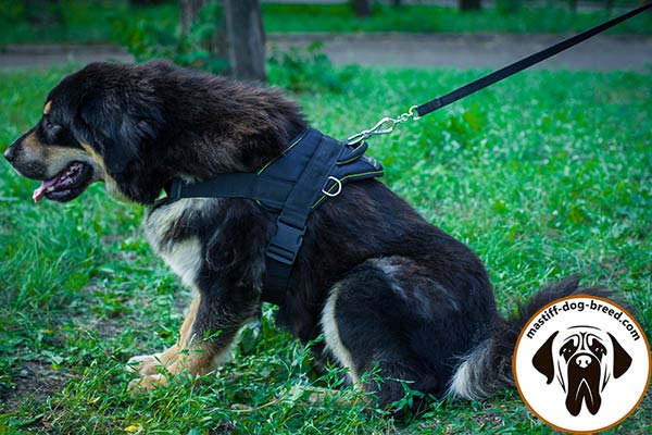 Mastiff nylon leash with rustless nickel plated hardware for police work