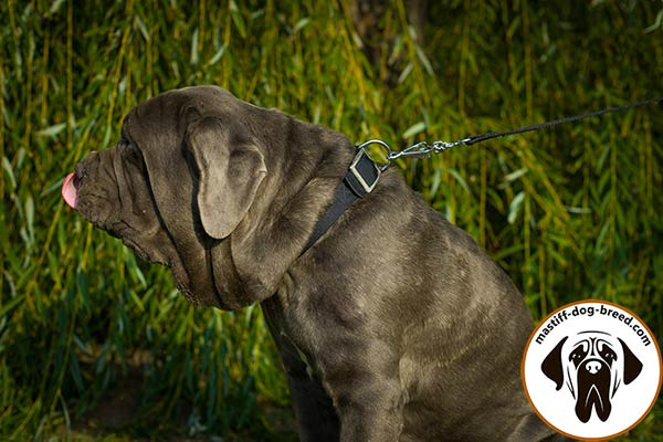 Mastiff nylon leash of lightweight material with handle for improved control