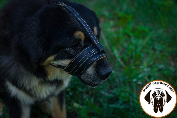 Reliable leather dog muzzle for Mastiff with Nappa padding