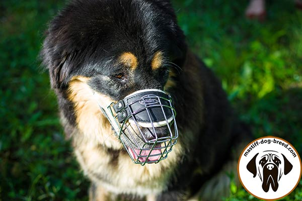 Metal cage Mastiff muzzle with adjustable leather strap