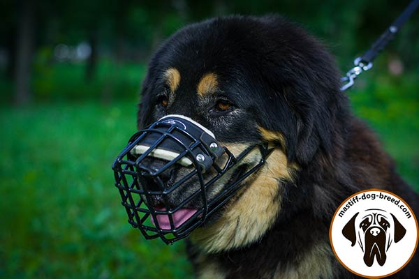 Metal cage Mastiff muzzle with special covering on wire