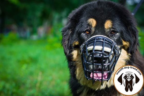 Metal cage Mastiff muzzle with comfy leather lining